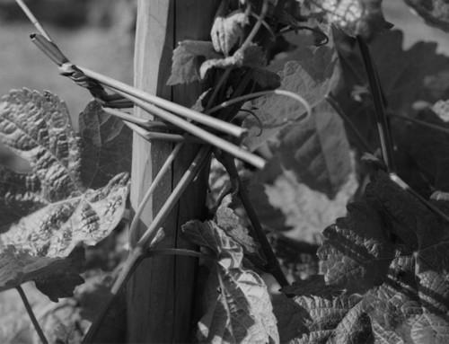 Chartreuse de Mougères